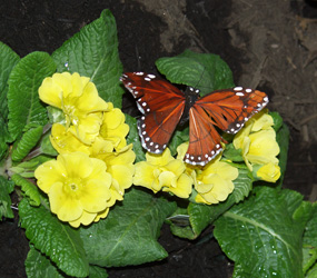Yellow flower with MonarchButterfly